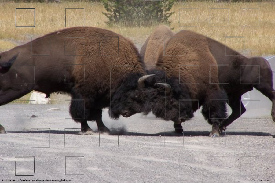 fightingbuffalosmall.jpg