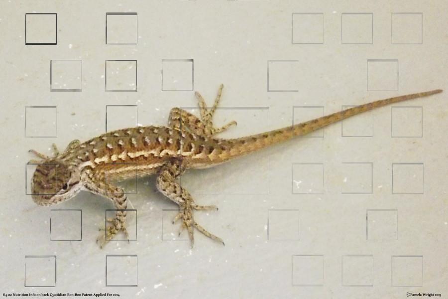 lizardonwhitesmall.jpg