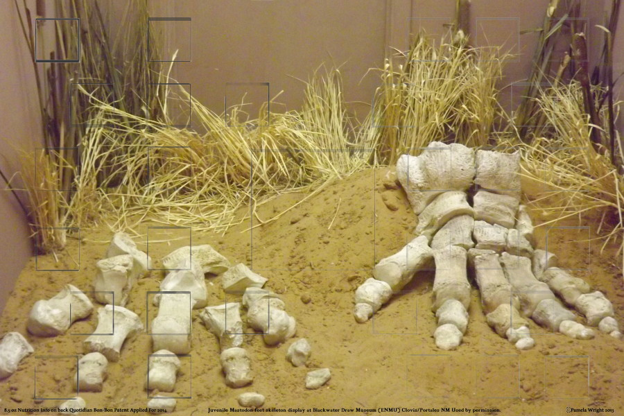 mastodonfeetskeletonsmall.jpg