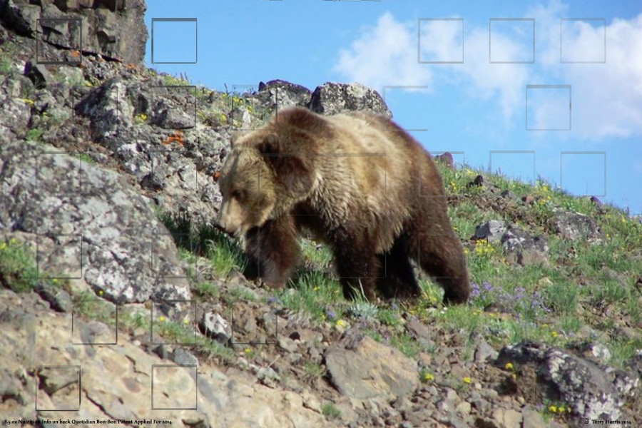 Yellowstonebearsmall.jpg