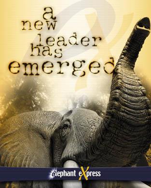 elephantX.com