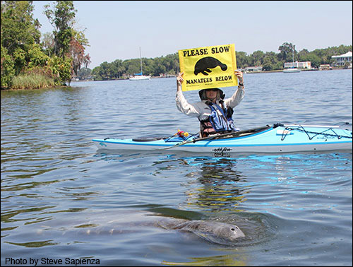 The Club's boating banner can be used to alert boaters in the area that a manatee is close by.