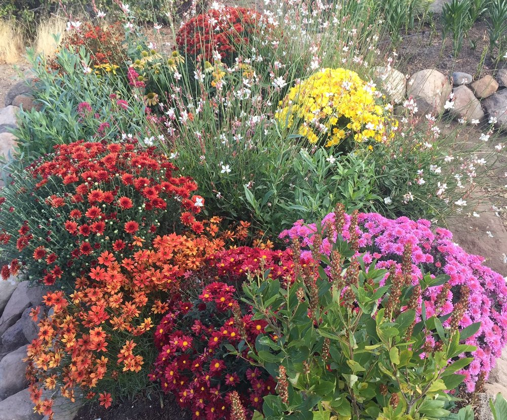 Newly created beds of shrubs and perennials grow in raised rocks beds previously covered in sagebrush and cheat grass.