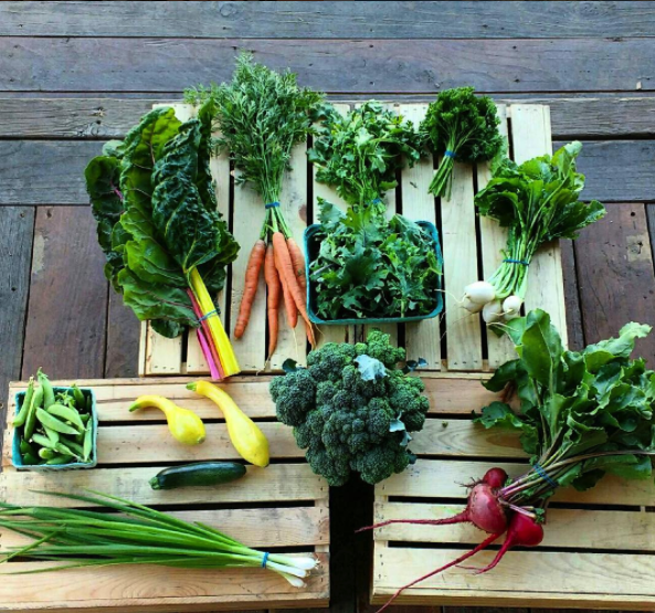 Week 6 Share of the 2017 season: Broccoli, summer squash, snap peas, salad turnips, salad mix, parsley, carrots, scallions, beets, swiss chard.