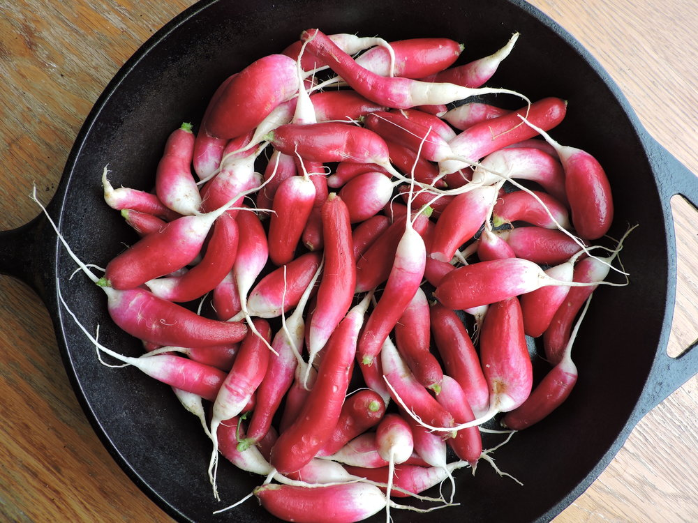 A skillet full of French radishes, the spiciest variety.