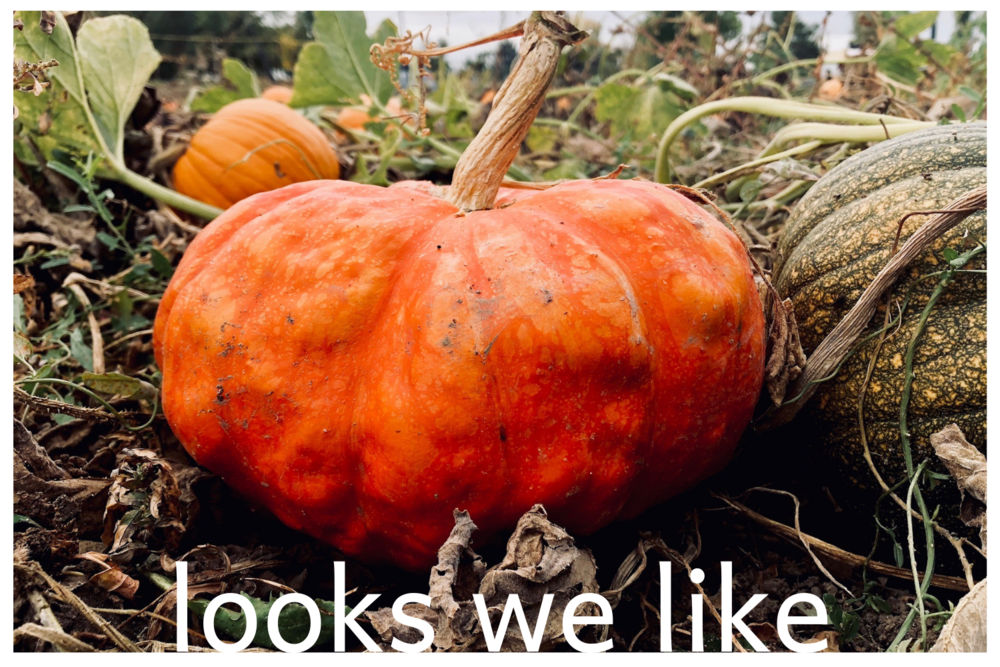 looks we like: october