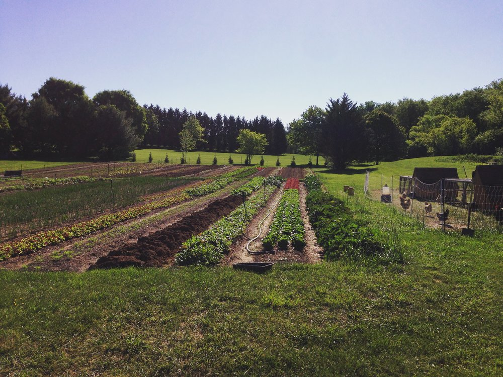 Our Farm, first year in production. Humble beginnings. Philip carved those beds from the lawn over many weeks, often after a full day's work in the office (before he quit to start farming full-time).