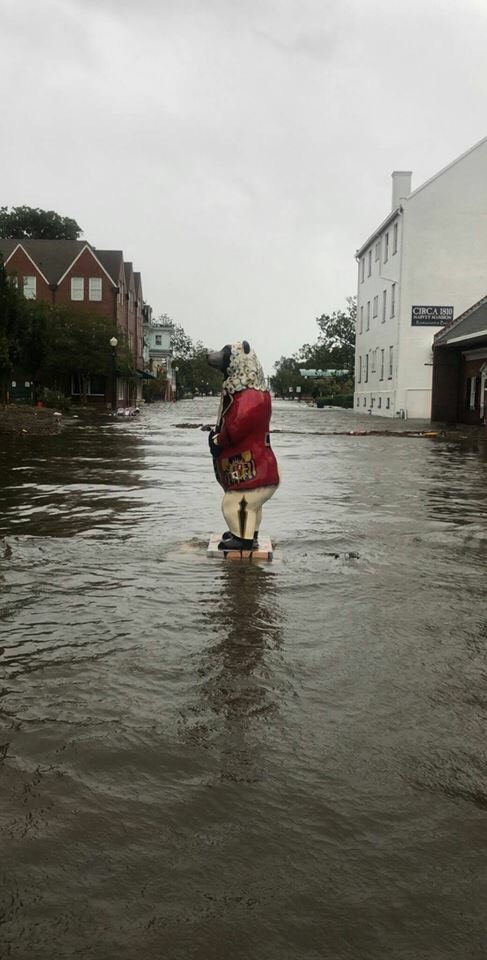 florence new bern bear.jpeg