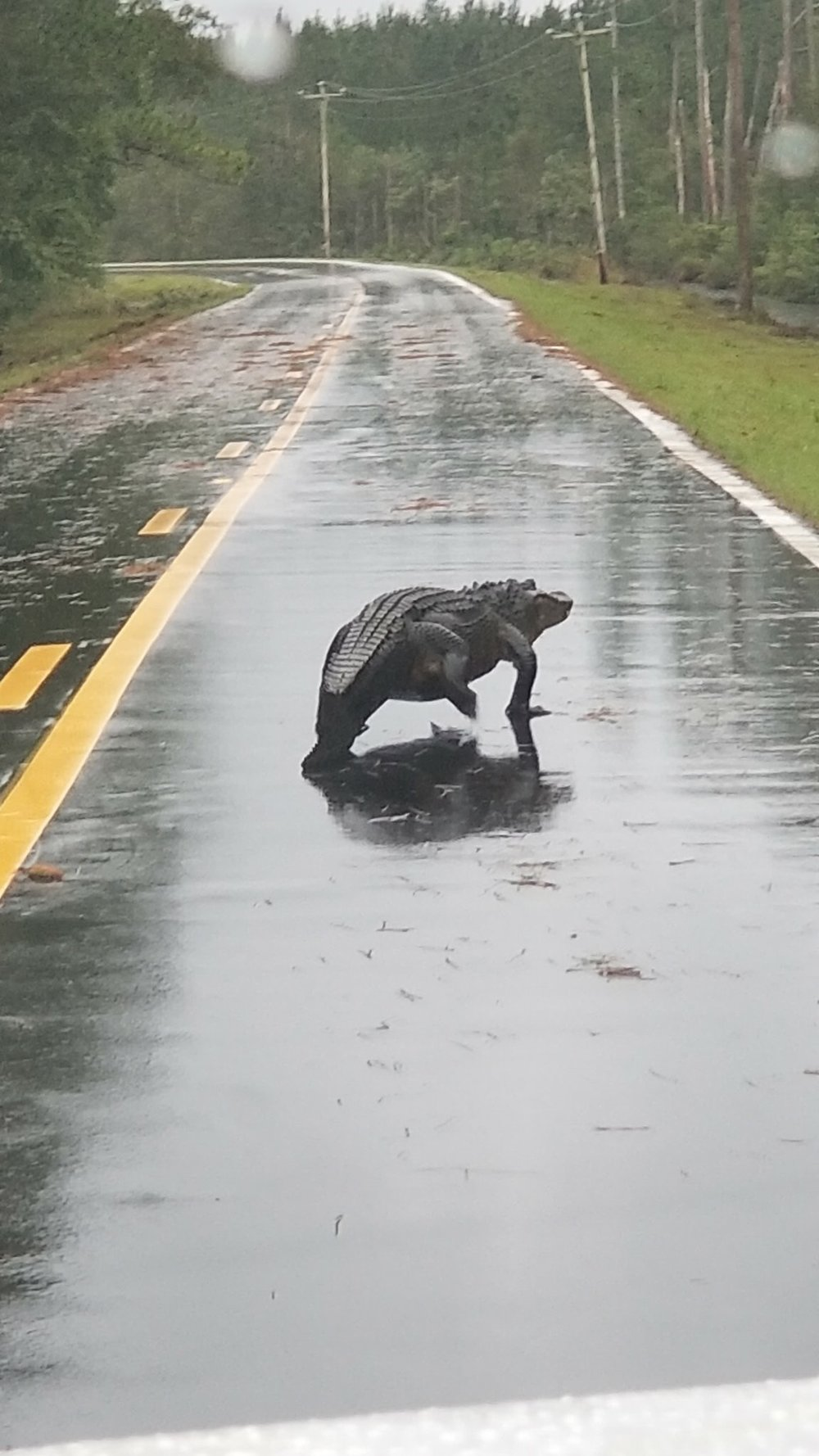 florence alligator hwy 33 outside aurora.jpeg