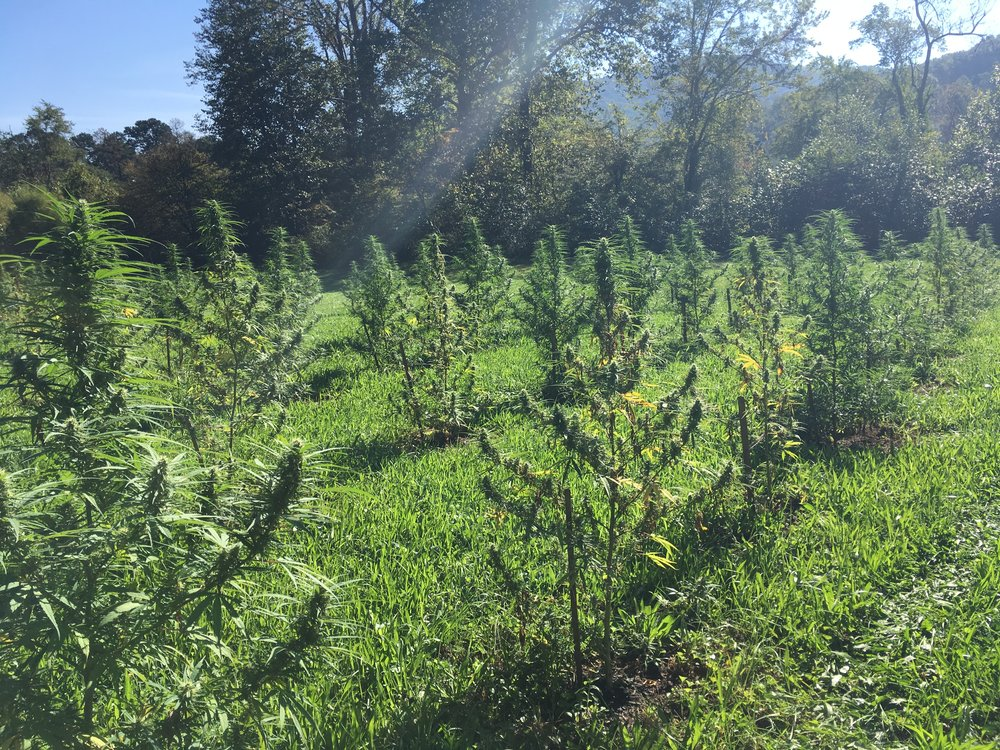 HEMP NOW AVAILABlE - Grown with Intention on Organic Soil
