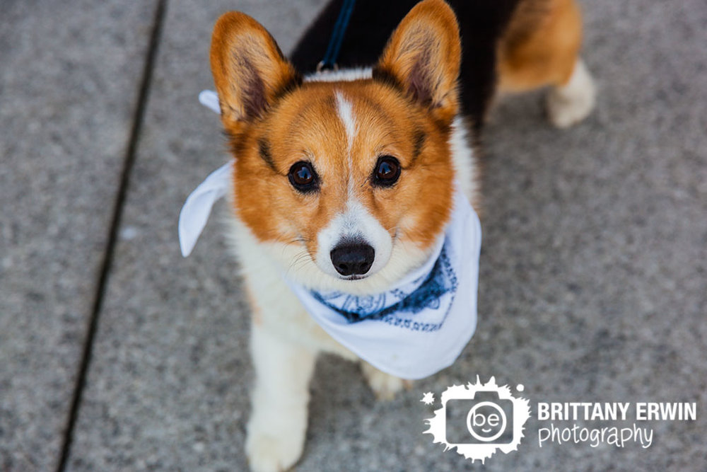 Downtown-Indianapolis-elopement-photographer-family-pet-corgi-bandana-Brittany-Erwin-Photography.jpg