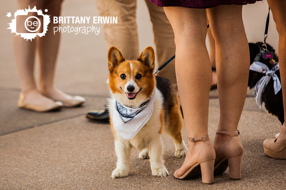 Downtown-Indianapolis-elopement-with-family-pet-corgi.jpg