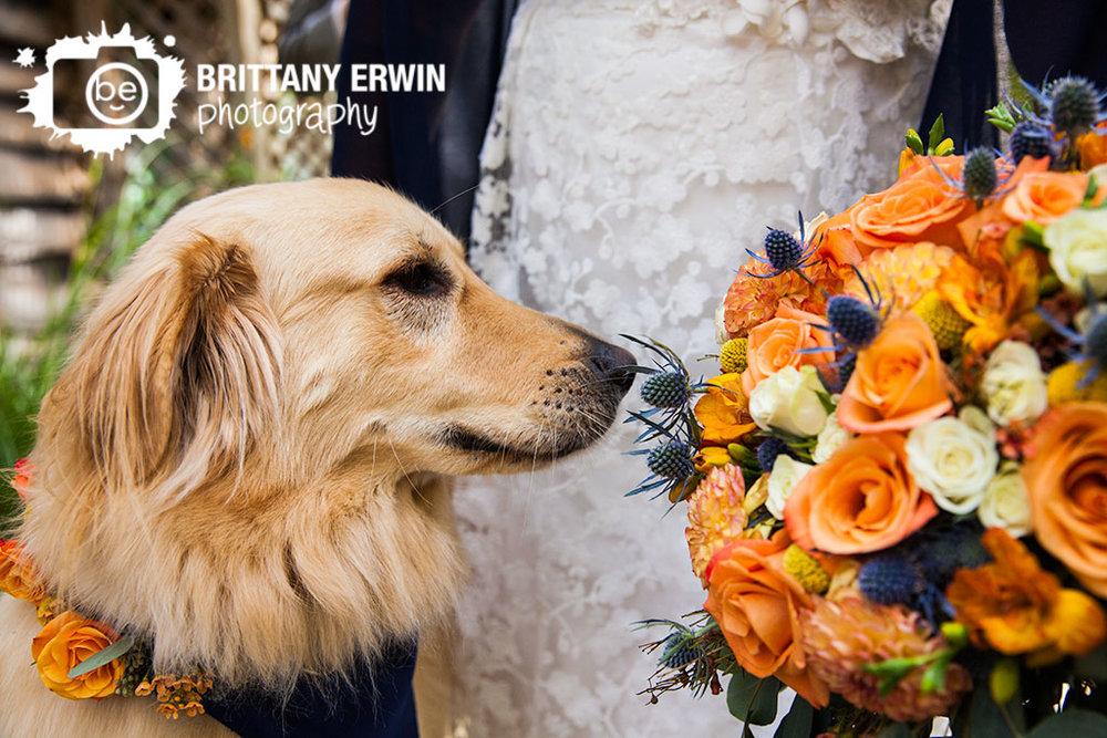 Story-Inn-Bokay-florist-dog-colar-smell-boquet-flowers.jpg