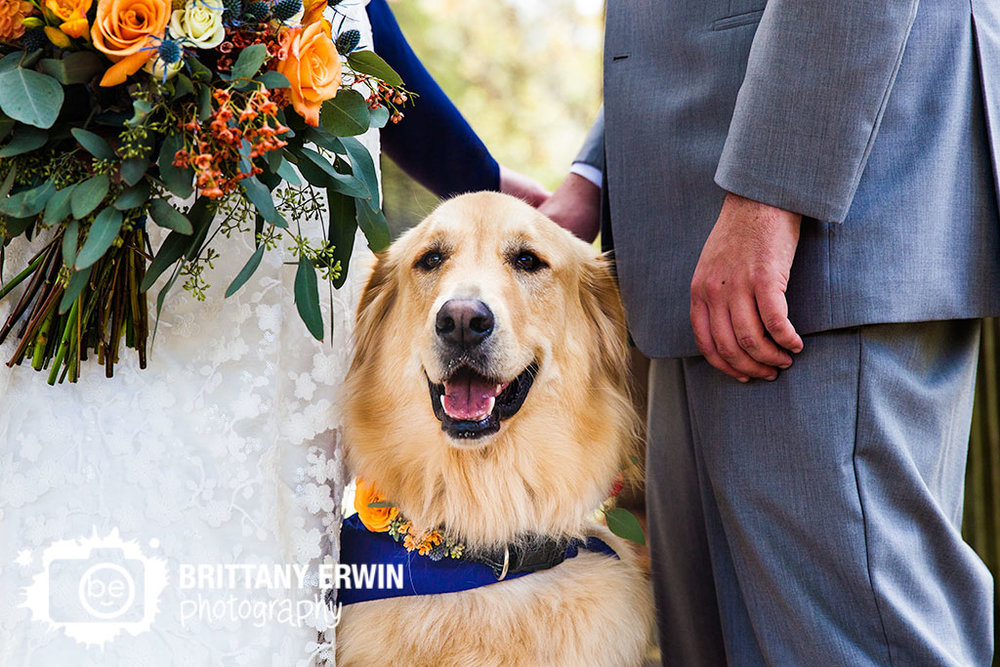 Story-Inn-wedding-photographer-lab-dog-Nashville-Indiana-pet.jpg