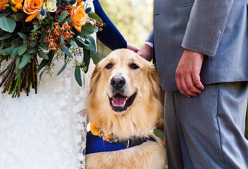 Story Inn wedding photographer pet dog ring bearer