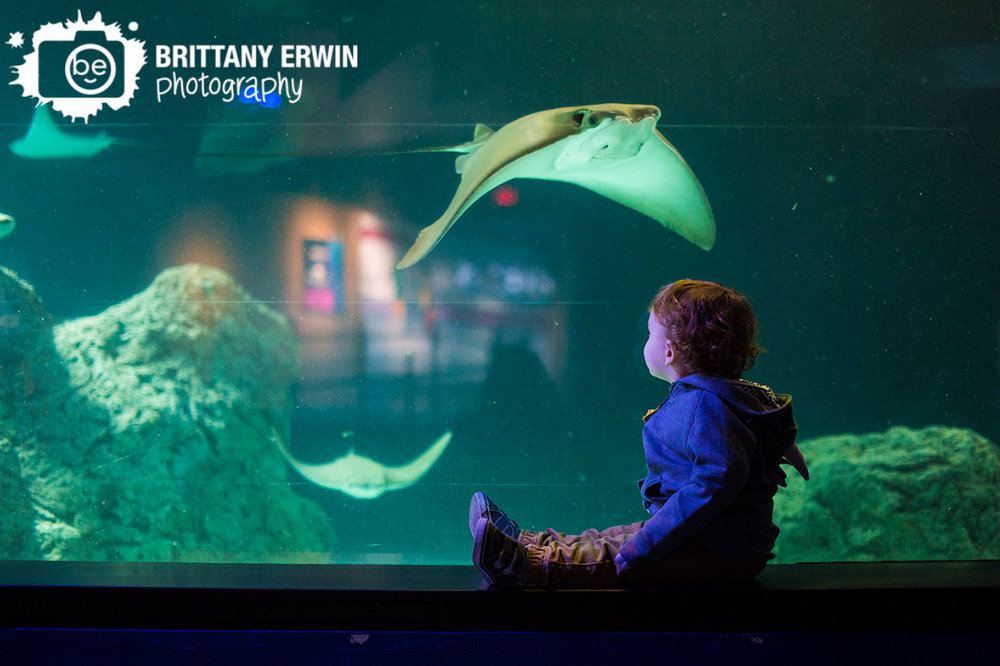Indianapolis-zoo-aquarium-sting-ray-second-birthday-toddler-portrait-photographer.jpg