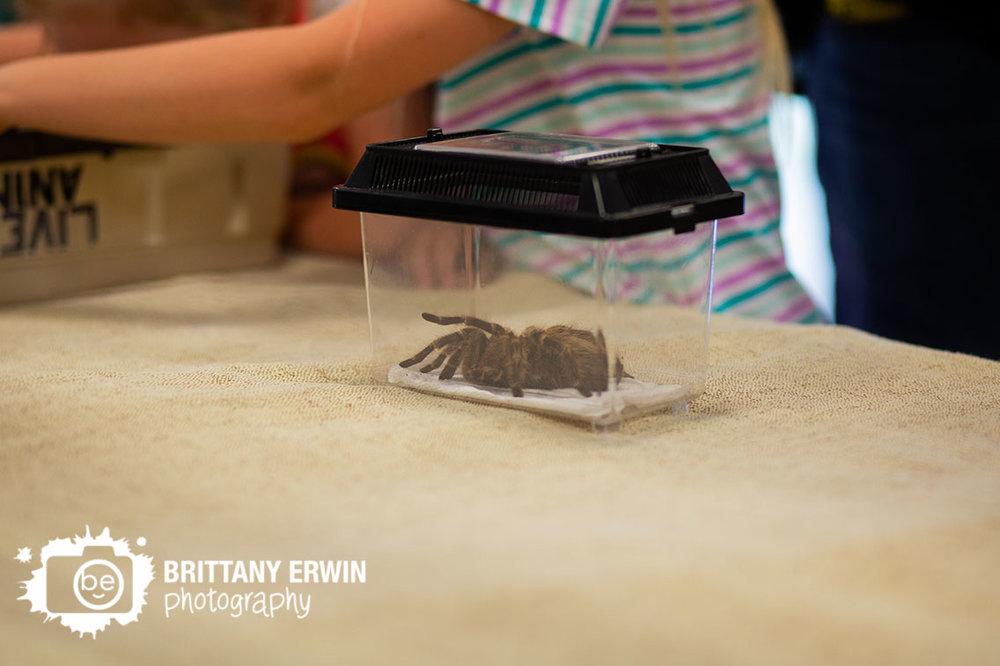 Silly-Safaris-tarantula-table-kids-activity.jpg