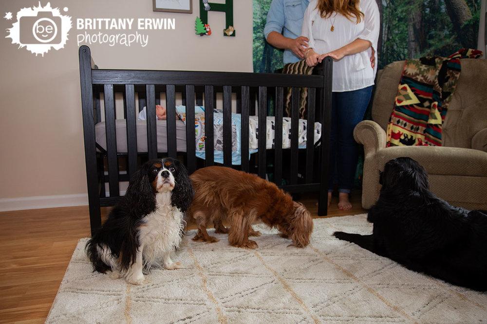 Indianapolis-lifestyle-newborn-portrait-photographer-pets-nursery.jpg