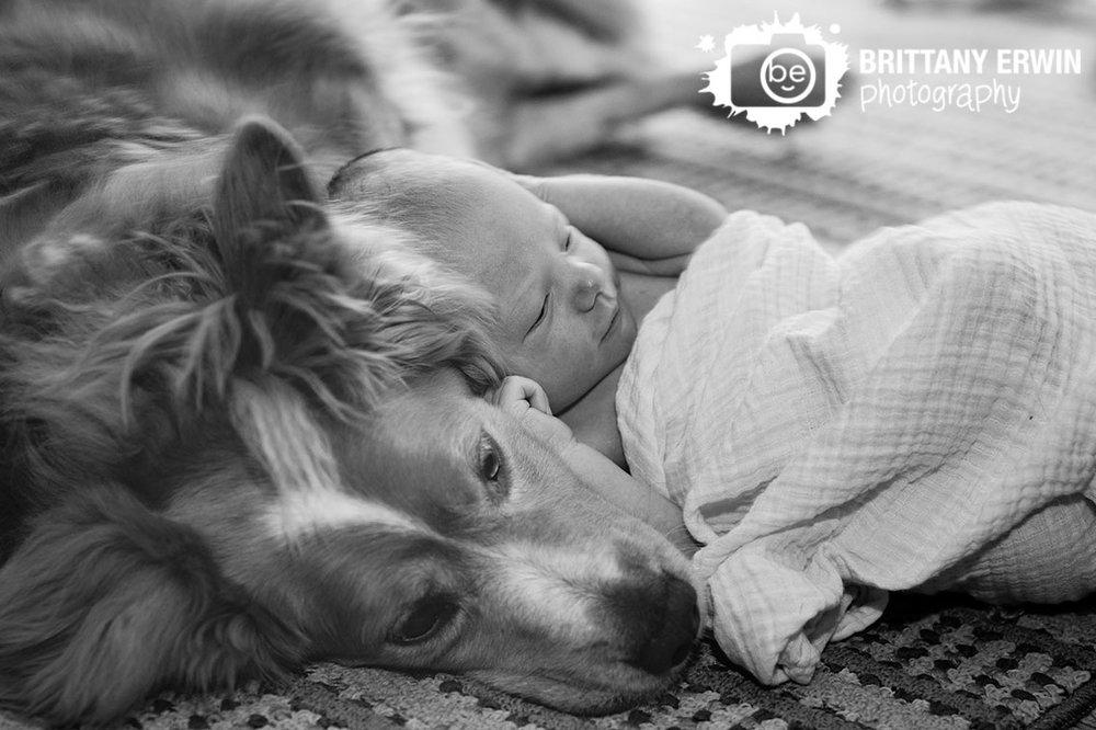 Newborn-baby-boy-portrait-photographer-lifestyle-a-boy-and-his-dog.jpg
