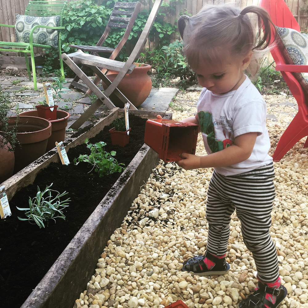 Planting herbs for some edible beauty products, with a tiny gardener.
