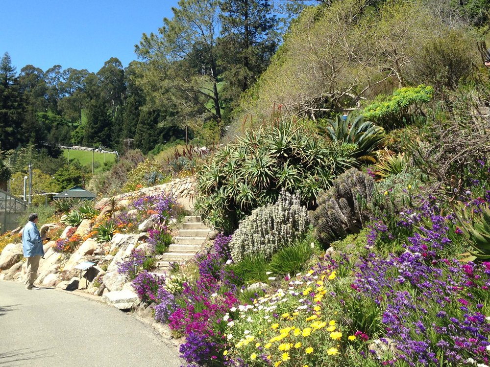 3 University Of California Botanical Garden At UC Berkeley The Sibbett  Group Flickr