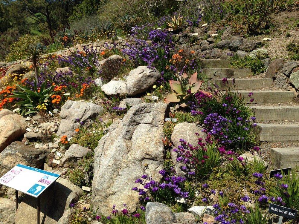 6 University Of California Botanical Garden At UC Berkeley The Sibbett  Group Flickr