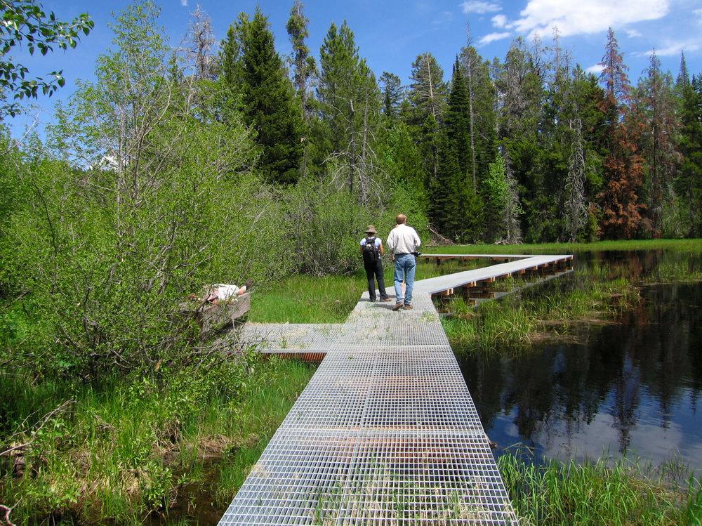 18-Laurance S. Rockefeller Preserve-The Sibbett Group-Wetland.jpg