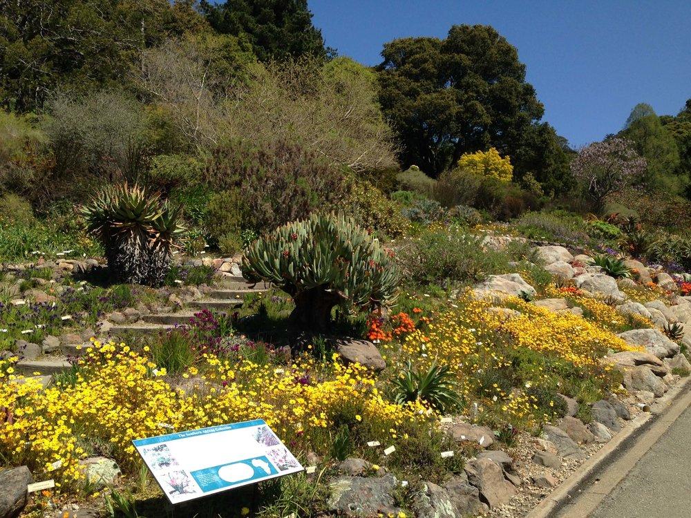 4 University Of California Botanical Garden At UC Berkeley The Sibbett  Group Flickr