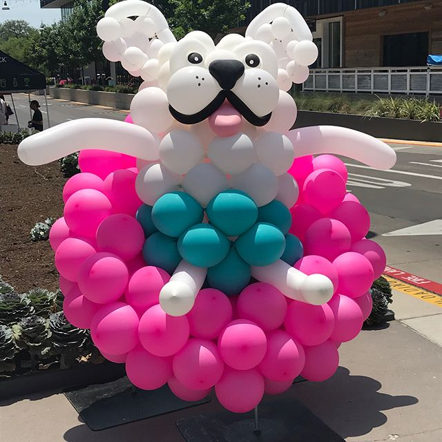 Hot day for the dogo in the suno! #dogsofinstagram #balloonsbynatethegreat #lamarunion