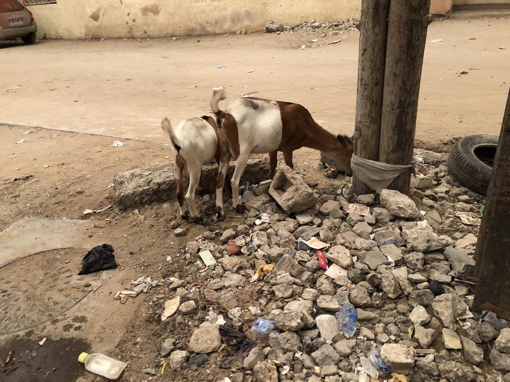 Street 05 Goats.jpg
