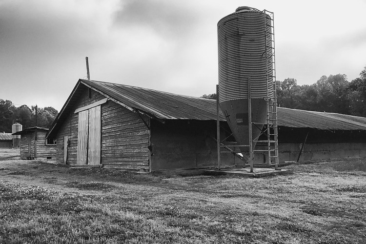 Old_Chicken_Houses.jpg