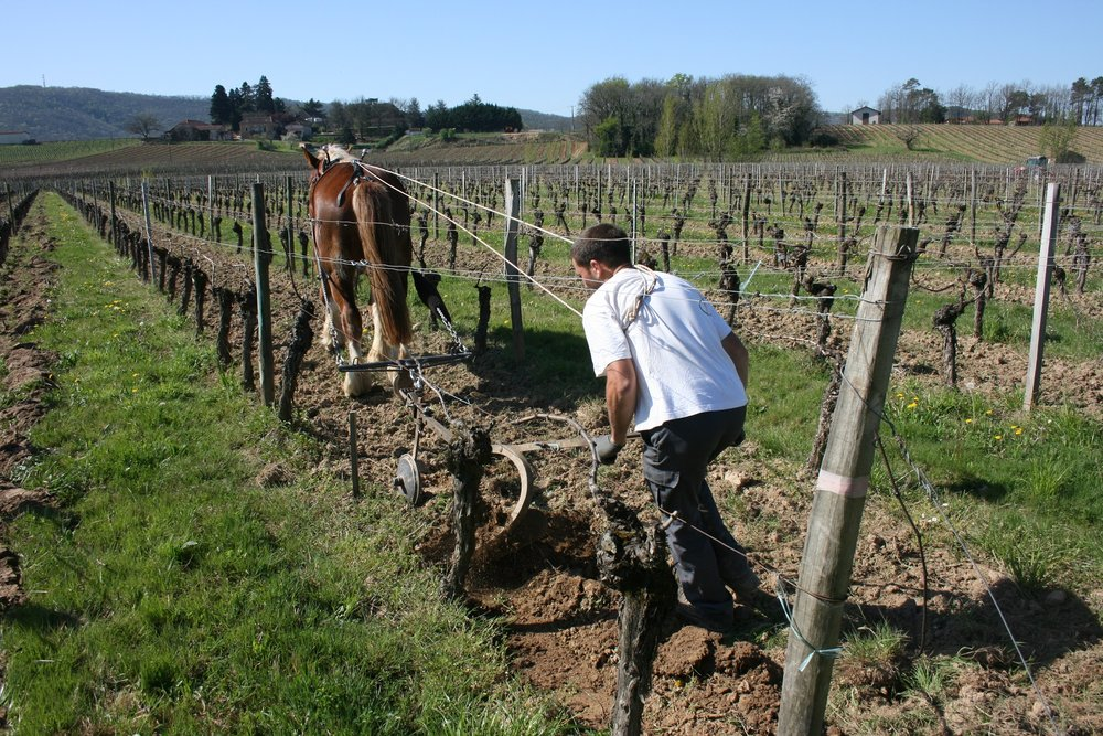 FAMAEY vineyard photo .jpg