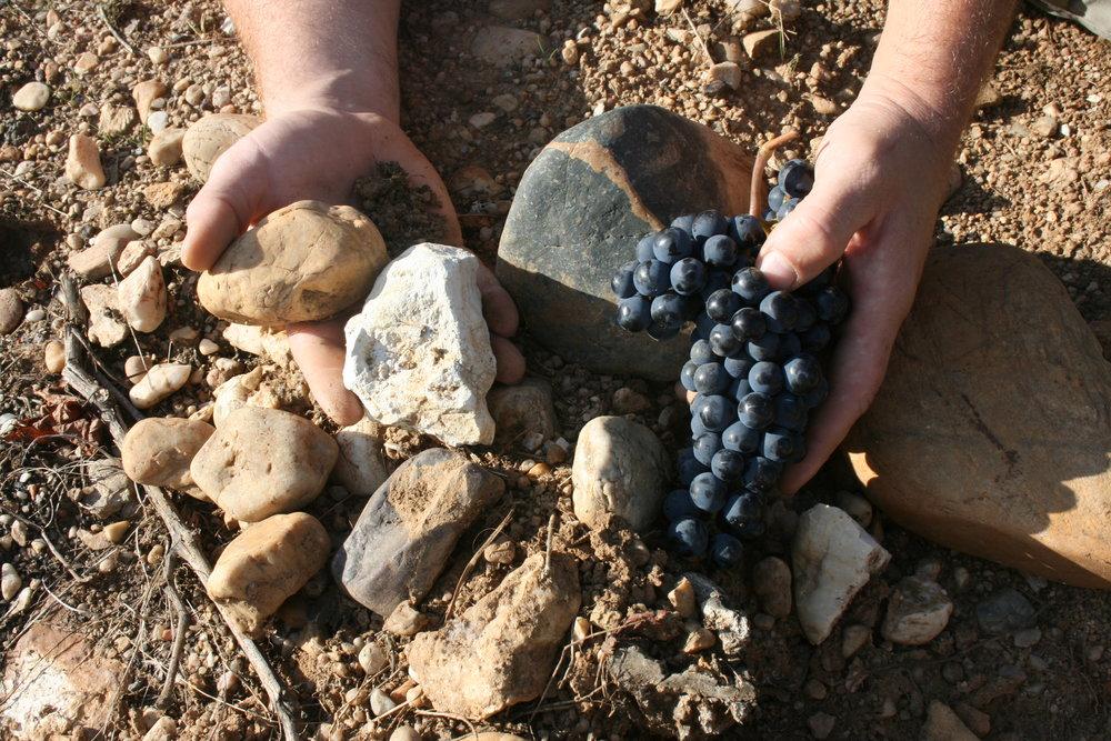 FAMAEY grape photo .JPG