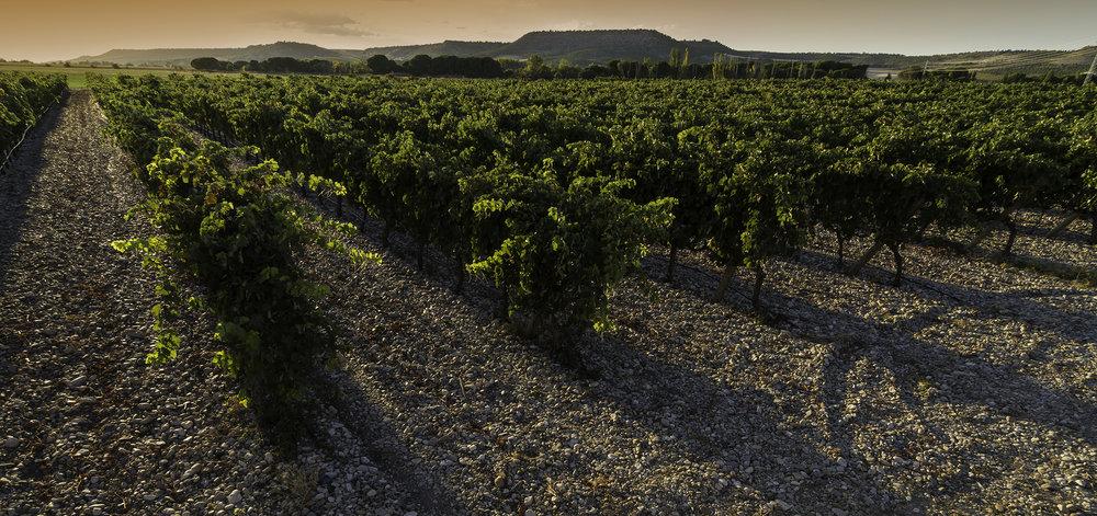 VEGA CLARA vineyard photo 1.jpg
