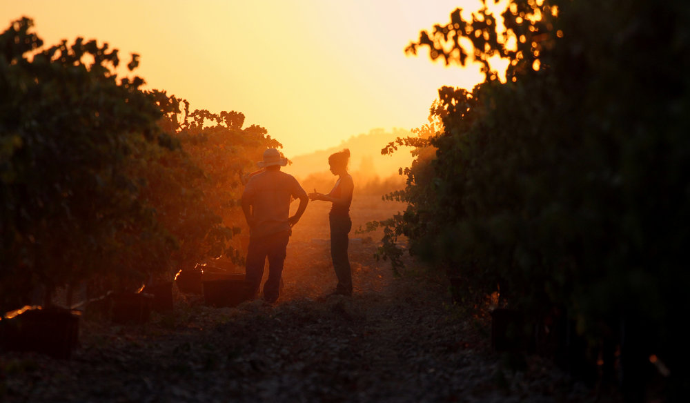 VEGA CLARA vineyard photo.jpg