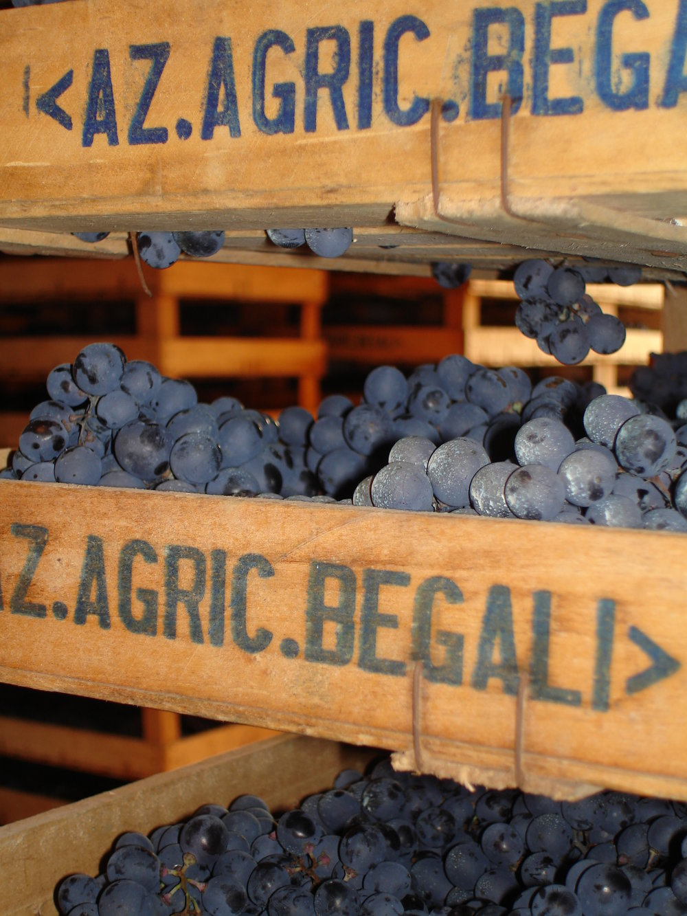Begali grapes photo 2.jpg