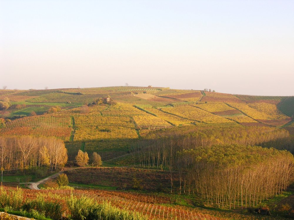 TRE SECOLI vineyards in Autumn photo.jpg