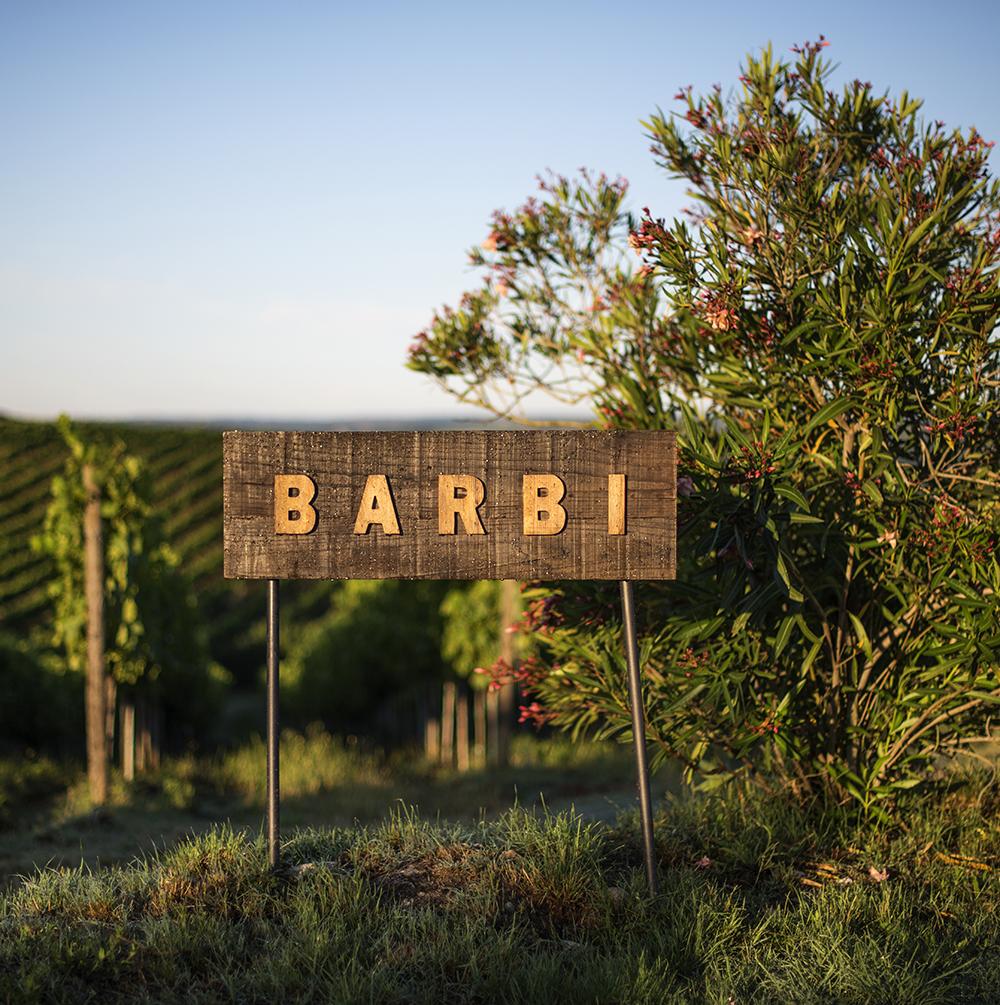 BARBI photo mbarbi14sq.jpg