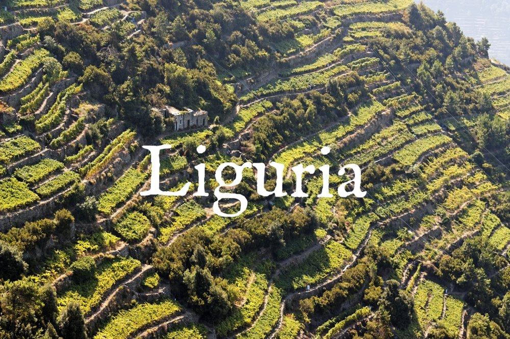 liguria-terraced-vineyards-in-cinque-terre.jpg