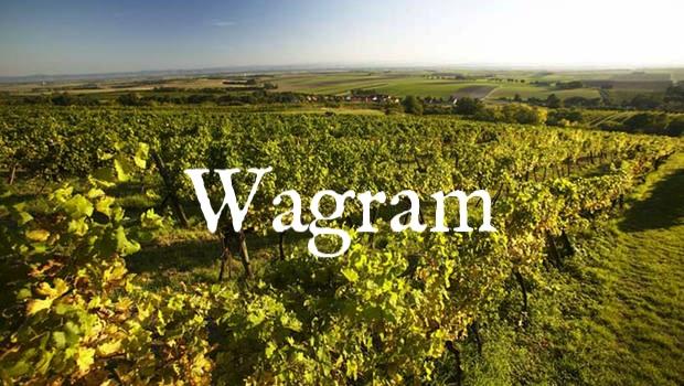 csm_WSTR-WAG-Weingaerten-Weinstrasse-Wagram-Lehmann_5c0b2ec708.jpg