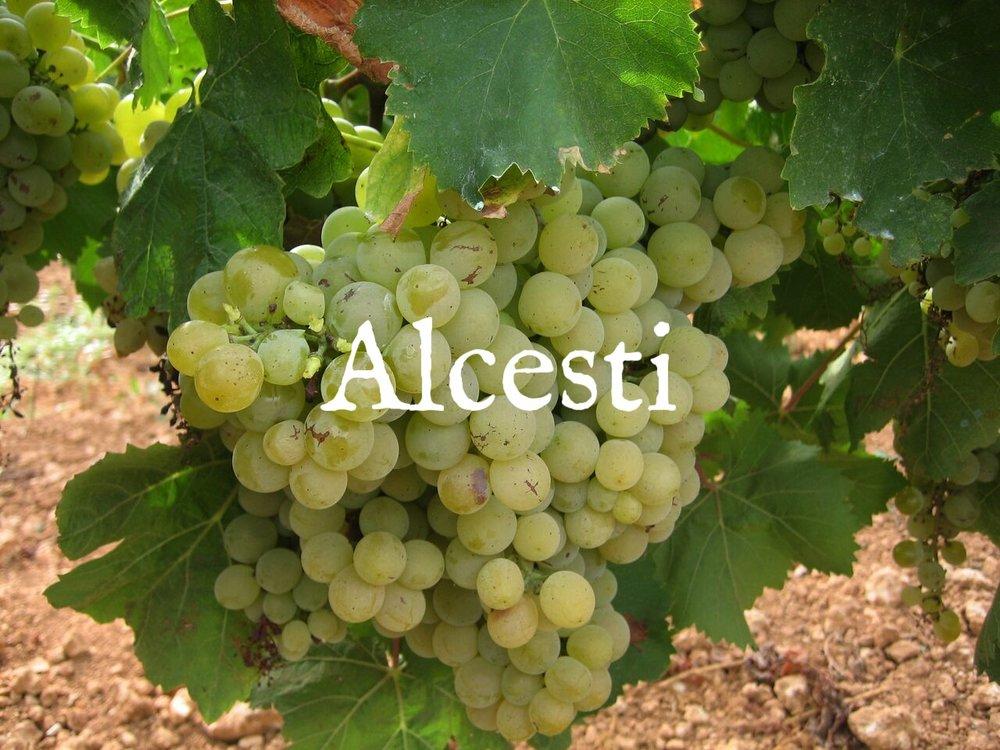 ALCESTI photo _preview-1.jpg