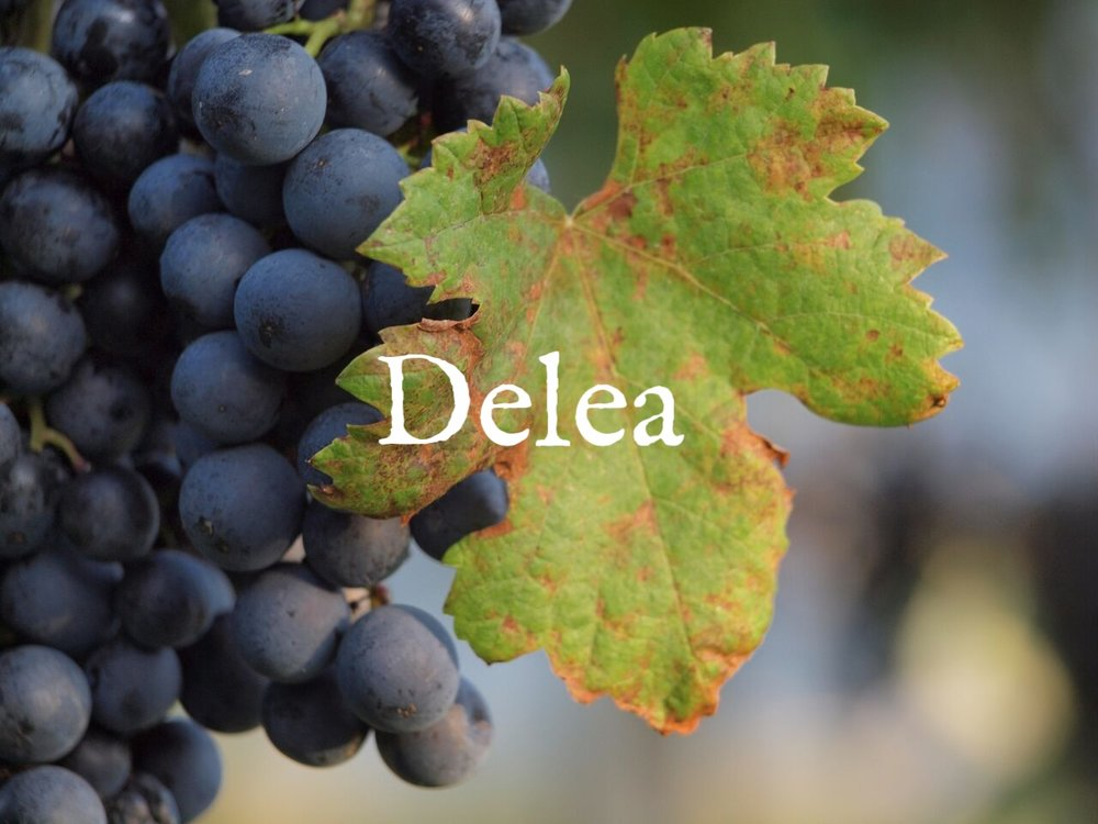 DELEA GRAPES PHOTO_preview.jpg
