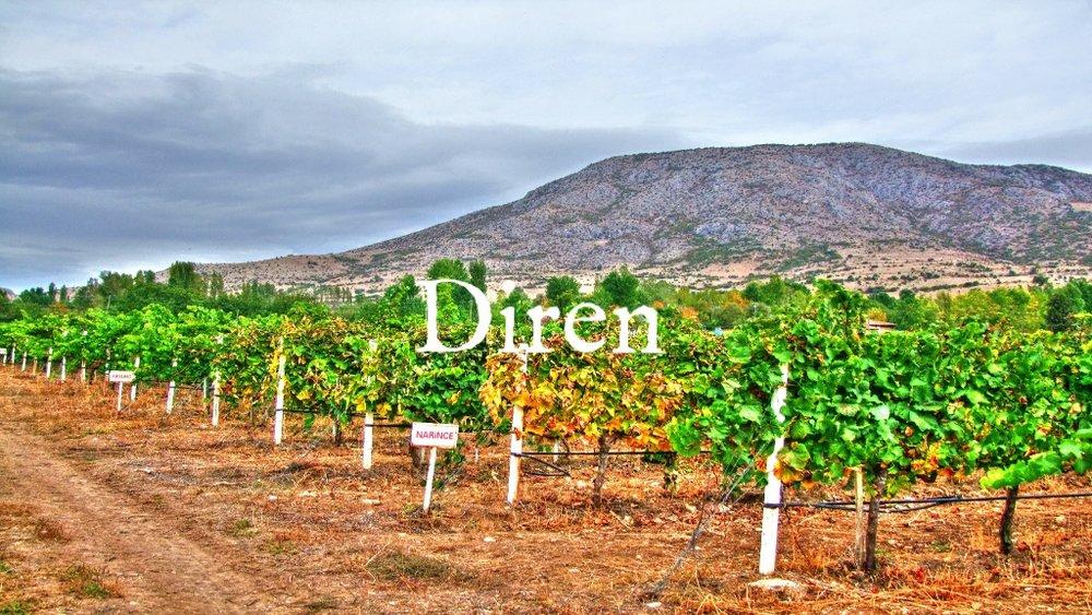 Diren-Tokat-Region-Sahova-valley-Narince-Vineyard-Scaled.jpg