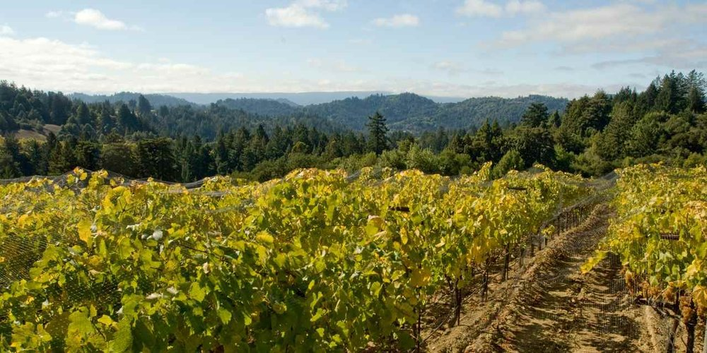 Hopland Wine Country 2.jpg