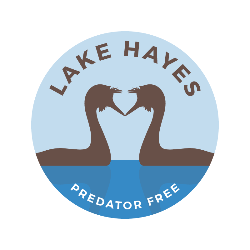 Lake Hayes trapping programme aims to bring back more native birdsong and wildlife.