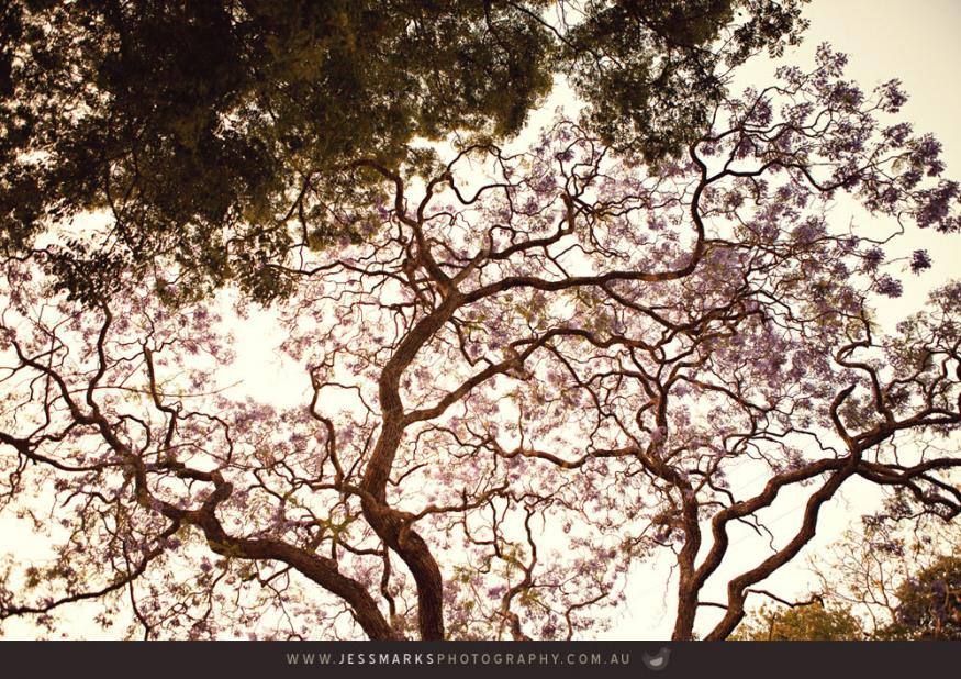 Brisbane Wedding Phoographer Jmp-obrien-blog-036