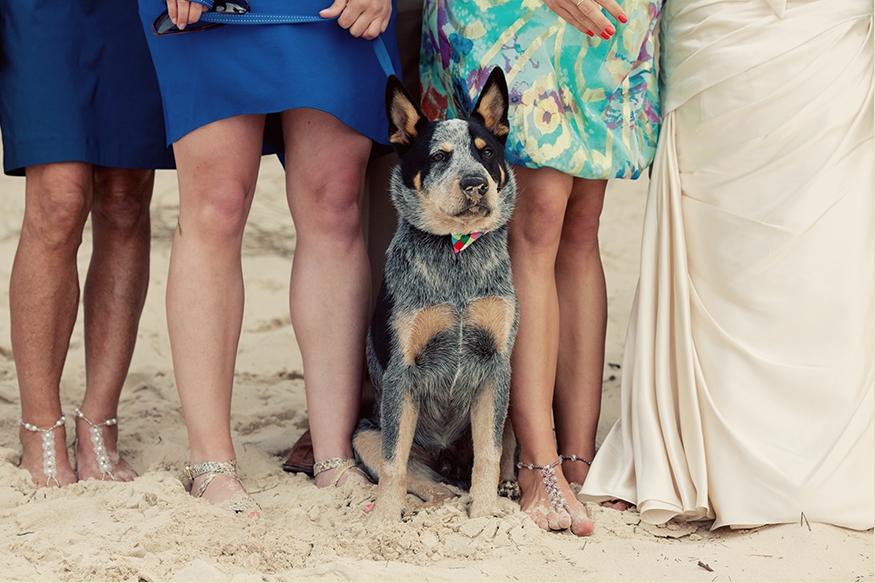Brisbane Wedding Phoographer Blog collage-1337306666167
