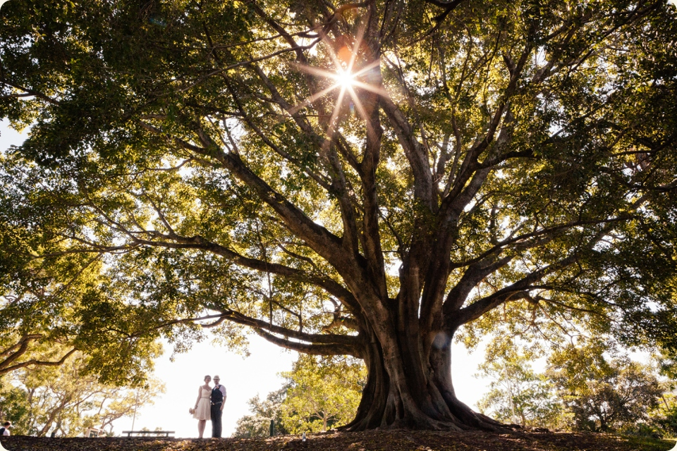 Bride & Groom Under Big Tree New Farm Park