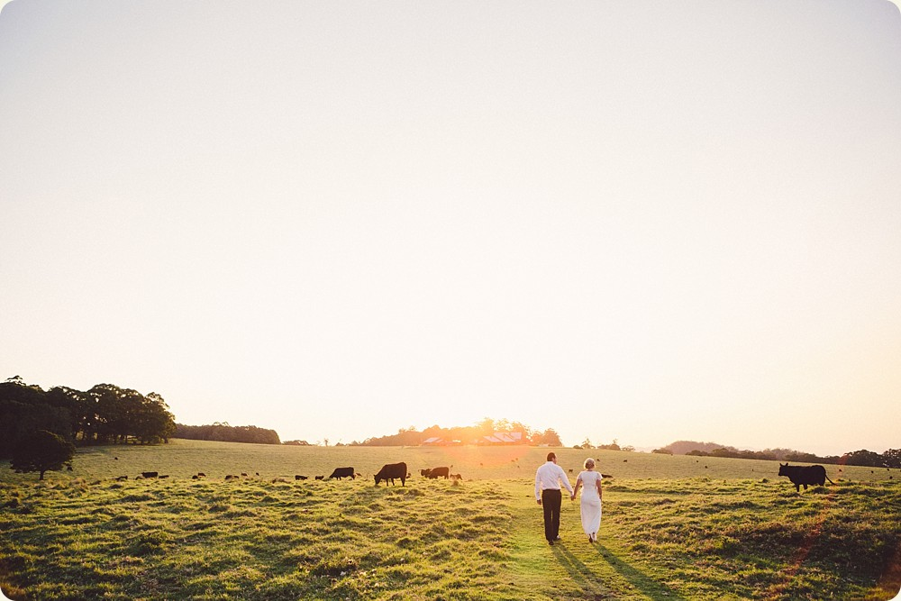 Wedding Photos with Cows at Spicers Peak Lodge
