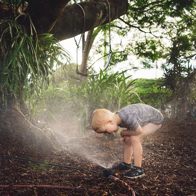 Charlie helped Steve install a sprinkler system... 😂